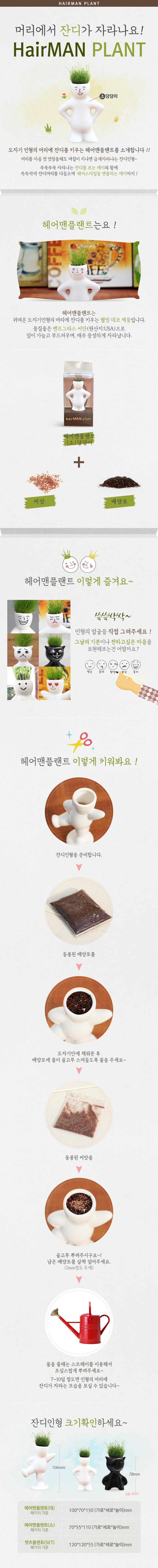헤어맨플랜트(소)-당당이 - 꿈쟁이플라워캔, 4,500원, 허브/다육 식물, 공기정화식물